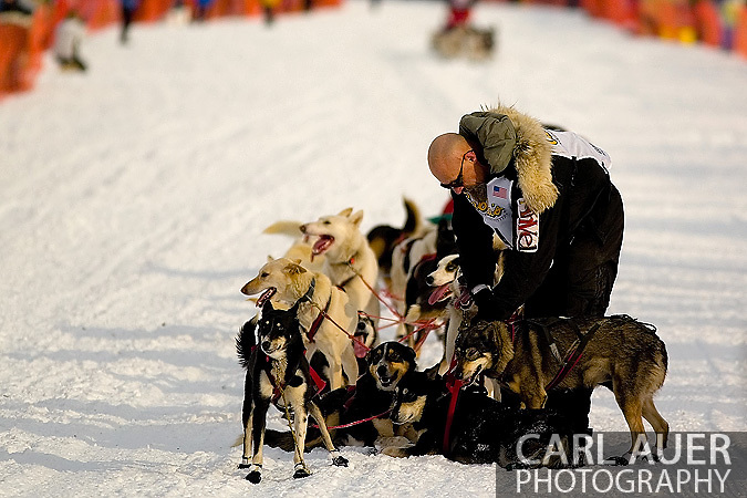 05 March 2006: Willow, Alaska - Paul Ellering, former professional wrestler, wrestles with a troublesome lead dog during the restart of the 2006 Iditarod on Willow Lake in Willow, Alaska