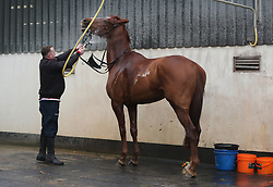 Samcro is washed down by Shane McCann during the stable visit to Gordon Elliott's yard at Cullentra House, County Meath.
