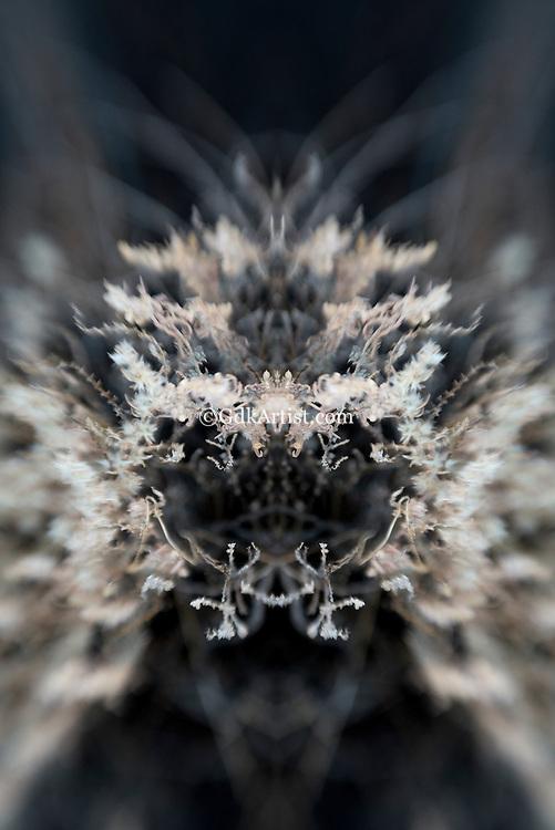 Inner Space Series 3