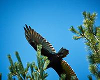 Turkey Vulture. Image taken with a Nikon N1V3 camera and 70-300 mm VR lens