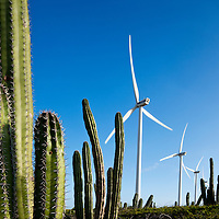 Dutch Antilles, Aruba, Wind turbines and cactus in Arikok National Wildlife Refuge at Windmolenpark Vader Piet