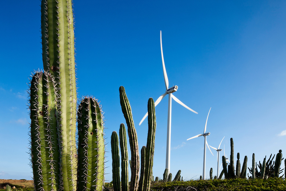 Dutch Antilles, Aruba, Wind turbines and cactus in Arikok National Wildlife Refuge at Windmolenpark Vader Piet