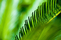 Palm Leaf of Florida in Abstract Detail