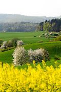 Landschaft im Frühling im nordwestlichen Odenwald, Hessen, Deutschland