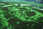 JINPING, CHINA - OCTOBER 09: (CHINA OUT) <br /> <br /> Water Pollution In Guizhou<br /> <br /> Photo shows the Sanbanxi reservoir covered by water lettuce and water hyacinth plants on October 9, 2014 in Jinping County, Guizhou Province of China. The free-floating aquatic water lettuce and water hyacinth plants bloomed in August, affecting transportation and local fish farming.<br /> ©Exclusivepix