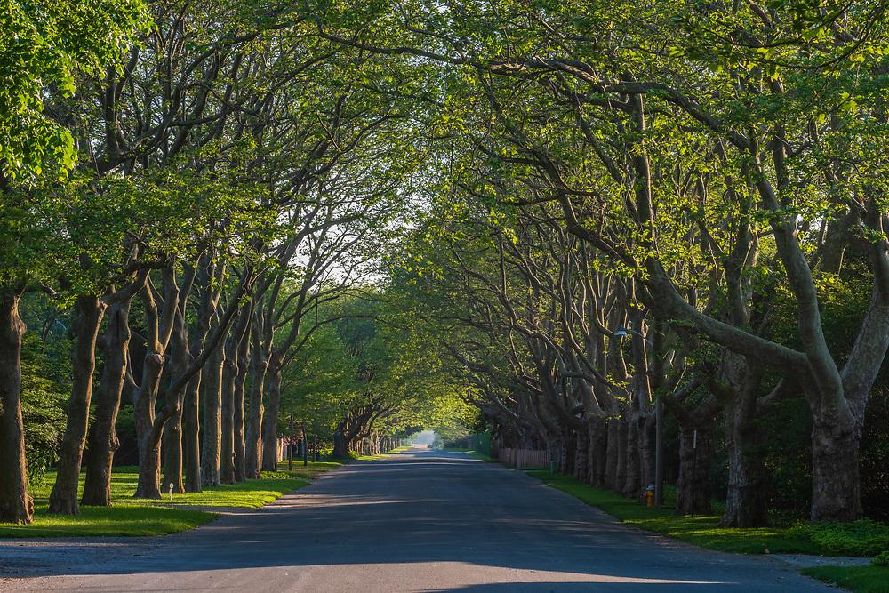 Canopy of trees covering road, East Hampton, NY
