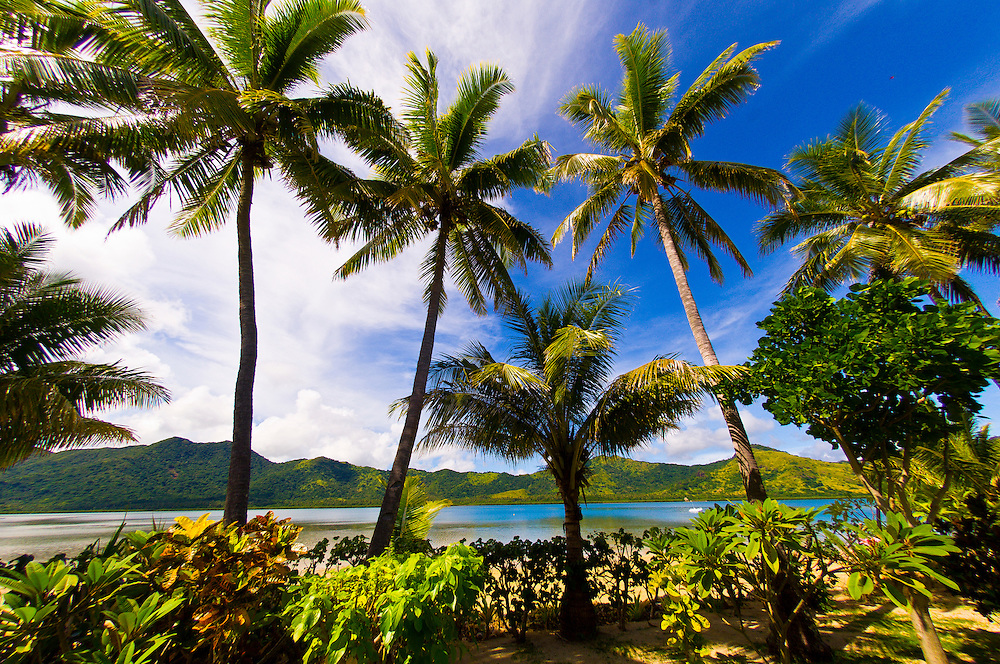 Palm trees, Nukubati Island Resort, Fiji Islands