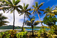 Palm trees, Nukubati Island Resort, Fiji Islands