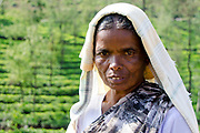 Portrait, Tea Plantation Worker