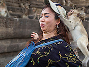 30 NOVEMBER 2014 - LOPBURI, LOPBURI, THAILAND: A juvenile long tailed macaque monkey steals a hat from a tourist at Phra Prang Sam Yot in Lopburi. Lopburi is the capital of Lopburi province and is about 180 kilometers from Bangkok. Lopburi is home to thousands of Long Tailed Macaque monkeys. A regular sized adult is 38 to 55cm long and its tail is typically 40 to 65cm. Male macaques weigh around 5 to 9 kilos, females weigh approximately 3 to 6 kg. The Monkey Buffet was started in the 1980s by a local business man who owned a hotel and wanted to attract visitors to the provincial town. The annual event draws thousands of tourists to the town.    PHOTO BY JACK KURTZ