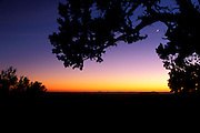 Silhouetted pine and crescent moon over Bright Angel Point, North Rim, Grand Canyon National Park, Arizona USA