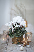 Cyclamen with silvered glass tealights, star and glass baubles