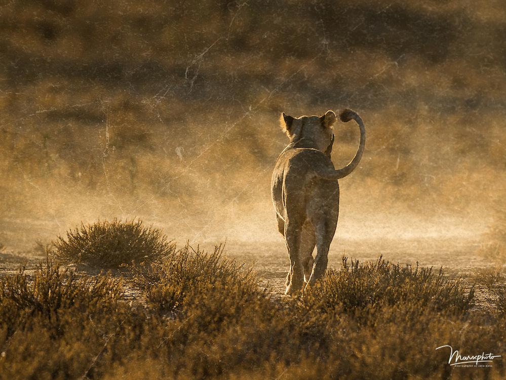 Textured and rich elements to original nature and wildlife prints from the Marxphoto gallery.