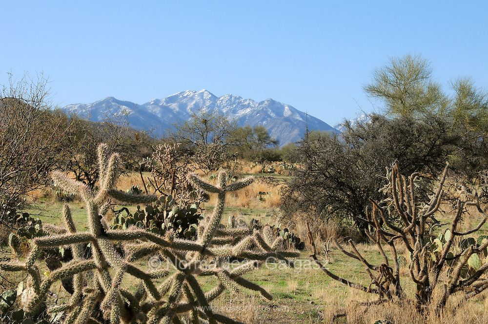 Snow covers Mount Wrightson in the Santa Rita Mountains of the Coronado National Forest in the Sonoran Desert, Green Valley, Arizona, USA.