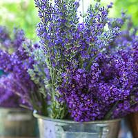 Botanicals: Fragrant Plants