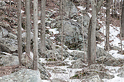 The grays and browns of the winter landscape in the woods of Durham Connecticut