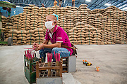 """15 NOVEMBER 2012 - PATHUM THANI, PATHUM THANI, THAILAND:  A worker keeps track of government purchased rice brought into a rice warehouse in Pathum Thani. The Thai government under Prime Minister Yingluck Shinawatra has launched an expansive price support """"scheme"""" for rice farmers. The government is buying rice from farmers and warehousing it until world rice prices increase. Rice farmers, the backbone of rural Thailand, like the plan, but exporters do not because they are afraid Thailand is losing its position as the world's #1 rice exporter to Vietnam, which has significantly improved the quality and quantity of its rice. India is also exporting more and more of its rice. The stockpiling of rice is also leading to a shortage of suitable warehouse space. The Prime Minister and her government face a censure debate and possible no confidence vote later this month that could end the scheme or bring down the government.   PHOTO BY JACK KURTZ"""