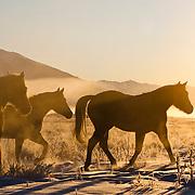 bar horseshoe ranch, mackay, idaho, 2011 western horse datebook november,