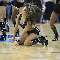 30 January 2009: New Orleans Hornets Honeybees cheerleaders perform during a 91-87 loss by the New Orleans Hornets to Golden State Warriors at the New Orleans Arena in New Orleans, LA.