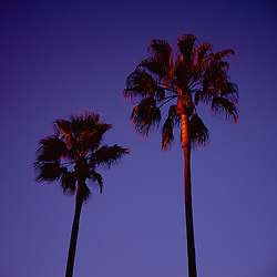 Palm trees at sunset. Test roll from Mamiya 6.