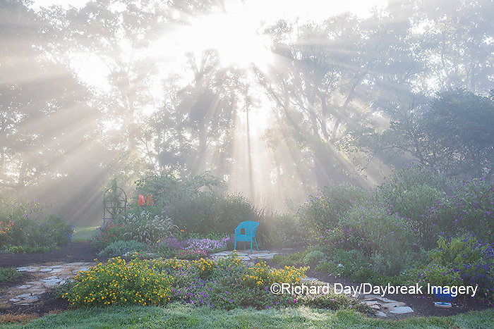 63821-23706 Sun rays in fog in flower garden, Marion Co., IL