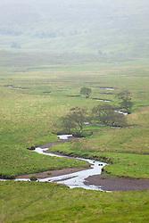 Alder trees and raised bog, Near Loch Ternait, Morvern, Scotland