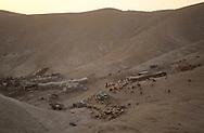 Jericho west Bank  Droves in the Judée desert  jericho  Israel    jericho  Israel     ///  l'oasis de Jéricho entre mer morte et Jourdain à l'heure où les troupeaux  vont boire  jericho  Israel   ///     L931001a  /  R00061  /  P116524