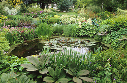 The lower pond at Glen Chantry with rodgersias, water lilies and iris