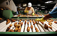 Xavier Mascareñas/The Daily Times; Helen Moore, with Navajo Agricultural Products Industry, sorts and grades potatoes at the potato processing plant on the Navajo Reservation on Sept. 11, 2009. She tosses potatoes in the bins in front of her, often sorting different types simultaneously, with one hand.