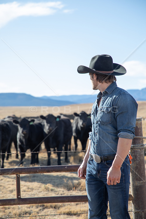 cowboy looking at a herd of cattle