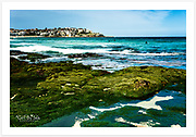 One of the year's lowest tides exposes a green carpet at the southern end of Bondi Beach [Bondi, NSW, Australia]<br />
