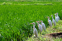 "I loved this seven bird line up. Found it very amusing to see such patience and focus in these birds""<br />