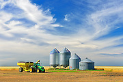 Grain bins and cart in lentil field <br /> Lang<br /> Saskatchewan<br /> Canada