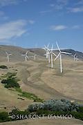 Wind Turbines Near the Columbia River, Washington