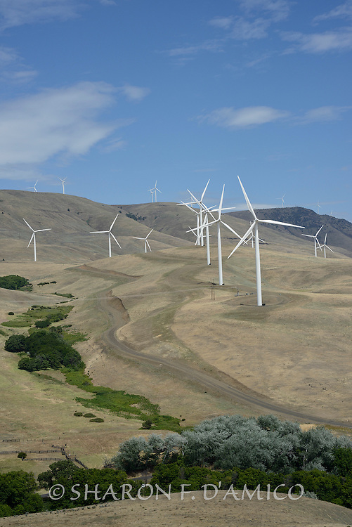 Wind Turbines Near the Columbia River, Washington