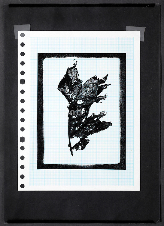 collage with leaf imprint and a page