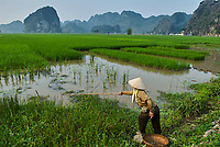 Vietnam. region de Ninh Binh. Tam Coc. Pêcheur dans les rizières. // Vietnam. Ninh Binh area. Tam Coc. Fisher on the rice fields.