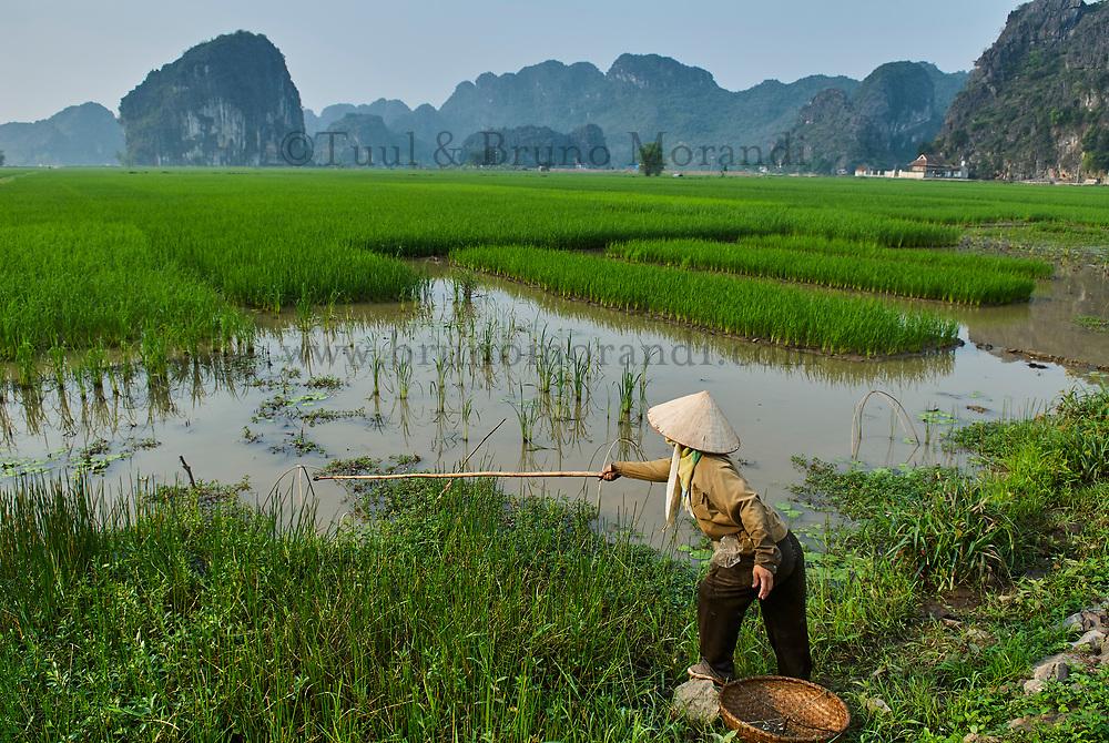Vietnam. region de Ninh Binh. Tam Coc. Pêcheur dans les rizières. // Vietnam. Ninh Binh area. Tam Coc. Fisher on the rice fields.