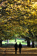 © Licensed to London News Pictures. 01/11/2011. Kew, UK. A couple walk through a leafy boulevard of trees. People enjoy the Autumn sunshine in Richmond Park today, 1st November 2011. Parts of the UK are experiencing higher than average temperature for the time of year.  Photo credit : Stephen Simpson/LNP