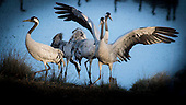 Birds - Fugler