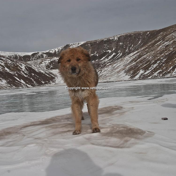 Mongolia. games on frozen lake. horse riding in the snow in the green lake - height lakes area -  ovokangai  /  jeu sur la glace, randonnee a cheval dans la neige au lac vert  - region des huit lacs - ovokangai - Mongolie