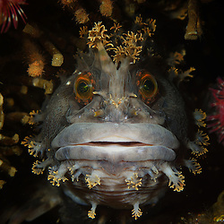 2015 Annual Underwater Photography Contest