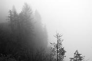 Trees on cliff - Mt. Rainier National Park, WA