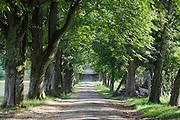 Graf-Eberhard-Allee, Eulbacher Park, Michelstadt, Odenwald, Naturpark Bergstraße-Odenwald, Hessen, Deutschland | Graf-Eberhard-Alley, Eulbacher Park, Michelstadt, Odenwald, Hesse, Germany