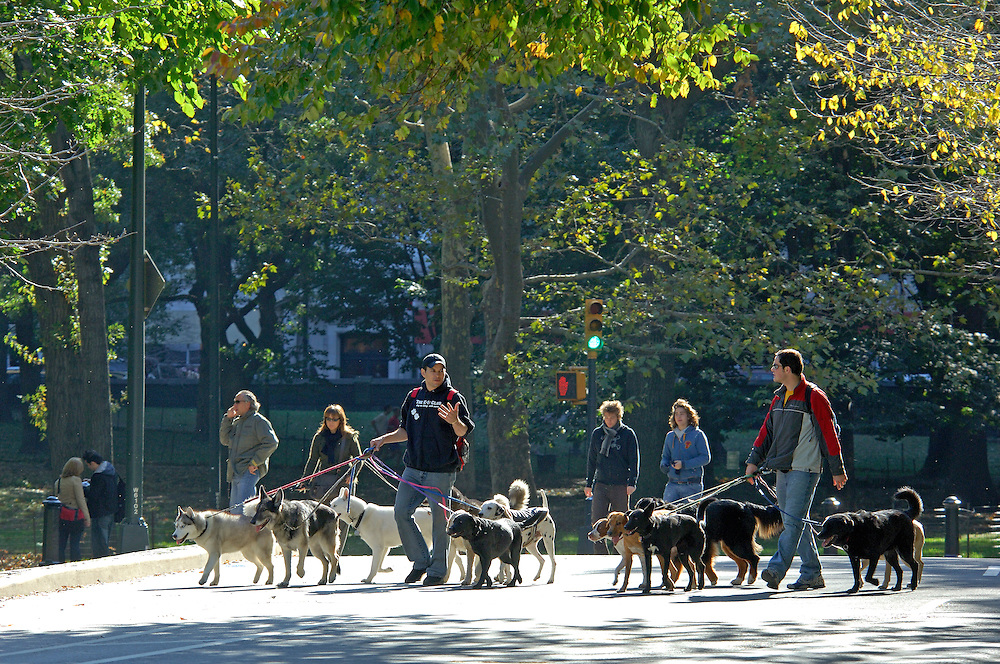 Dog walkers, Central Park, Manhattan, New York, New York, United States of America