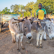 CAPTION: Early in the morning, Tranos is out collecting water using a donkey cart. More borehole pumps mean more people like him will have easier access to water for household use, as well as for agriculture. LOCATION: Mawoneke Village, Chivi District, Masvingo Province, Zimbabwe. INDIVIDUAL(S) PHOTOGRAPHED: Tranos Sirivhoyi.