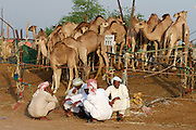 Early morning is the busiest time at the Camel Market. Camel herders having a chat.