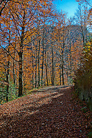 Leaf strewn road with autumn trees in the Valle Onsernone in Ticino, Southern Switzerland.
