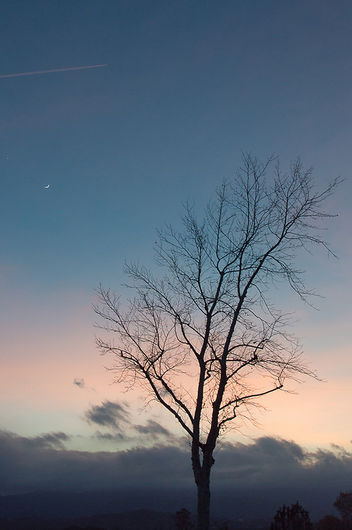 One leafless tree against a dark evening sunset sky with the moon and contrail.