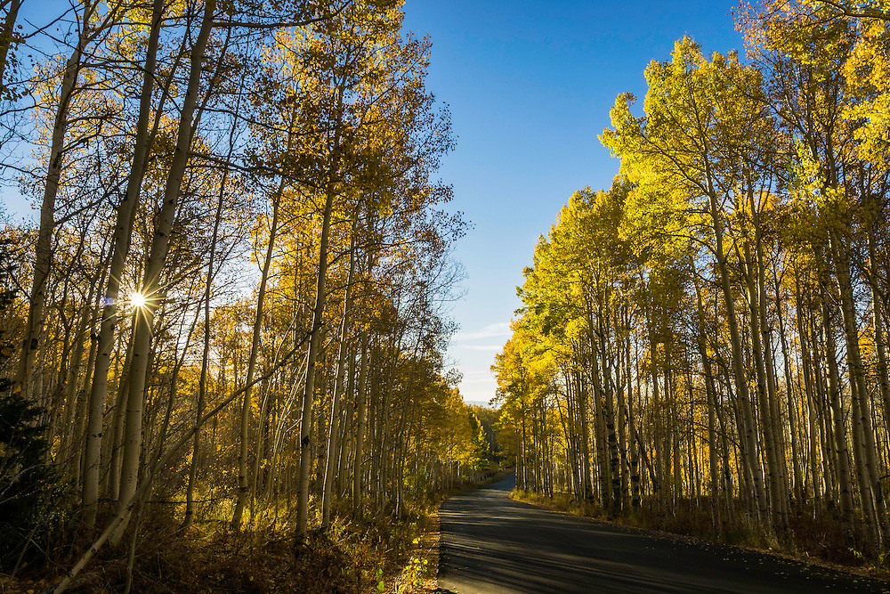 A winding road through the aspen trees in Utah's Wasatch Mountains as the sun shines through the leaves.